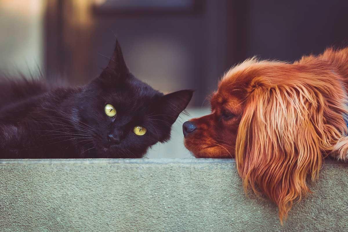 gato estirado al lado de un perro