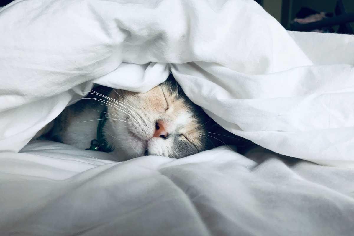 gato durmiendo en una cama tapado con una sábana