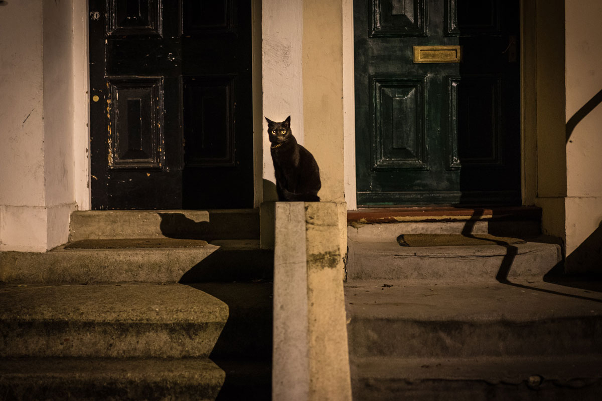 gato negro en unas escaleras