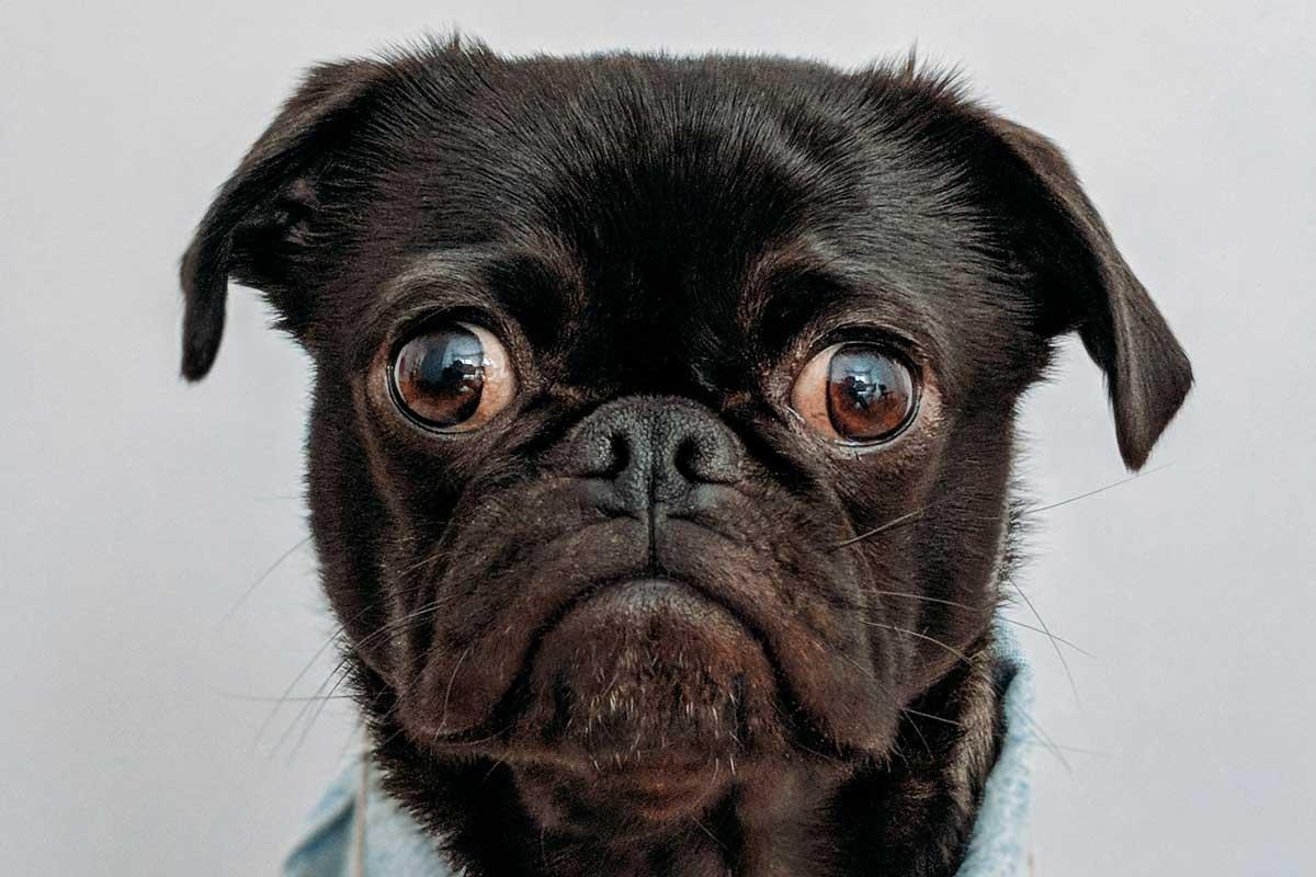 perro con cara de triste