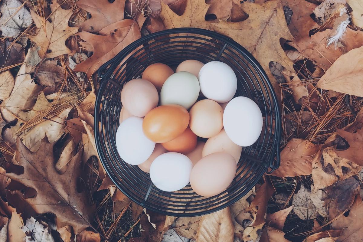 huevos mismo cesto
