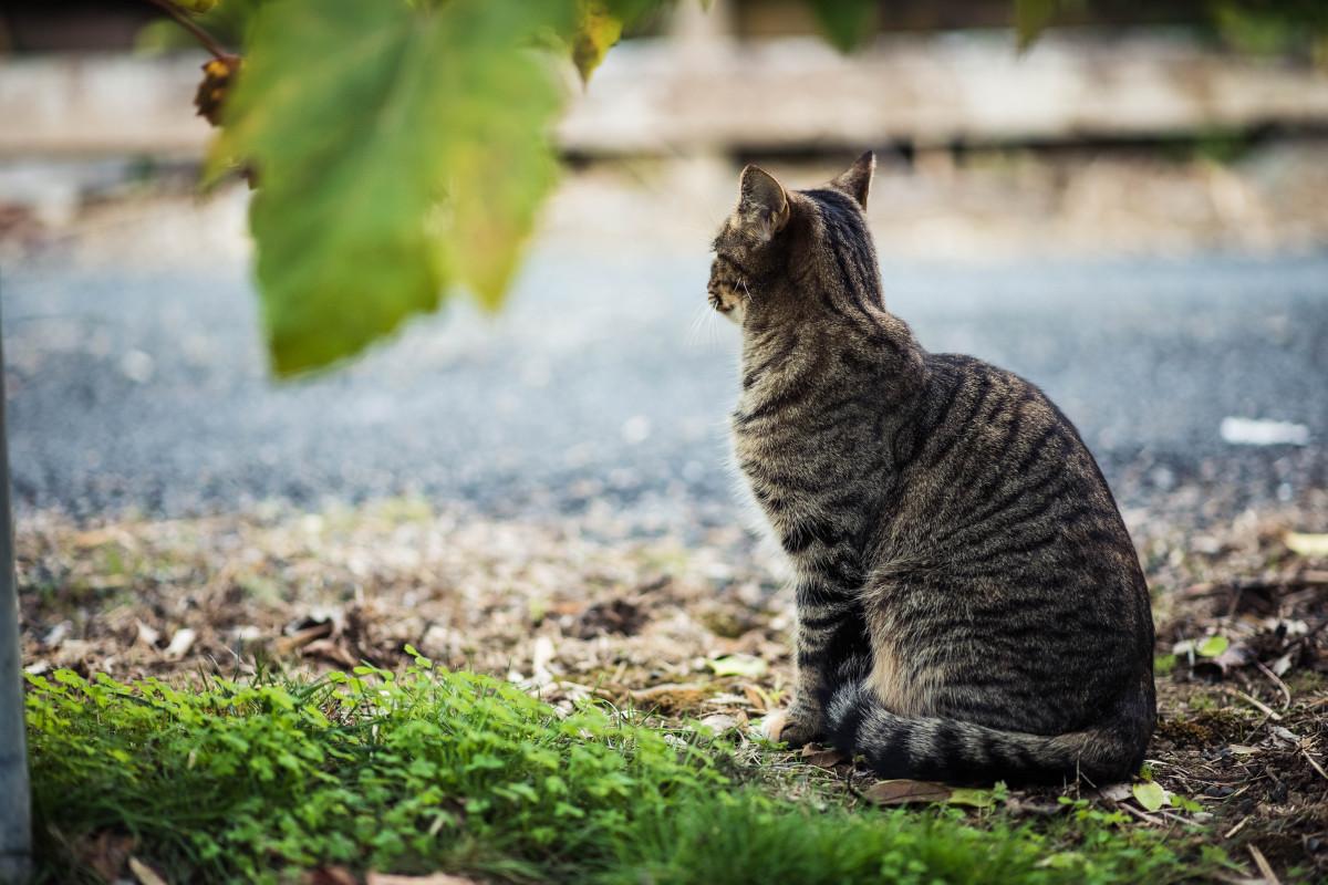 El gato de mis vecinos 6