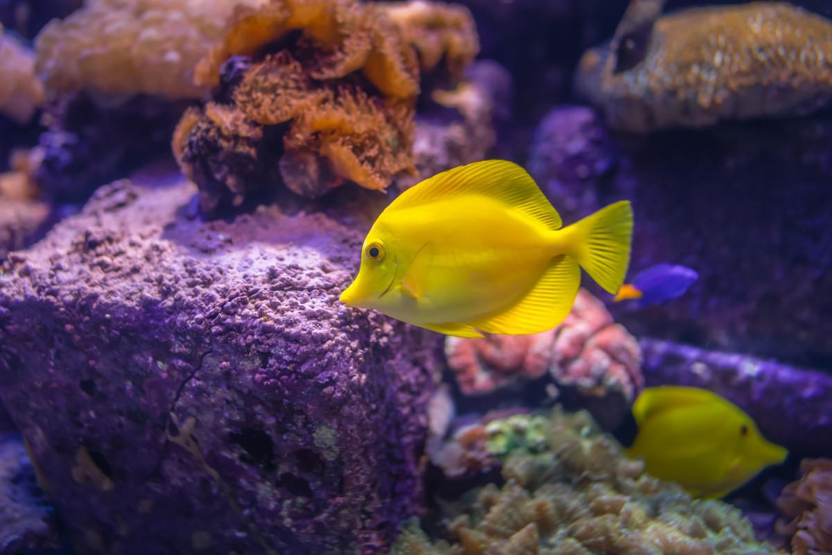 Bucear como pez en el mar 4